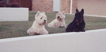 Hamish-Lucy and Molly.