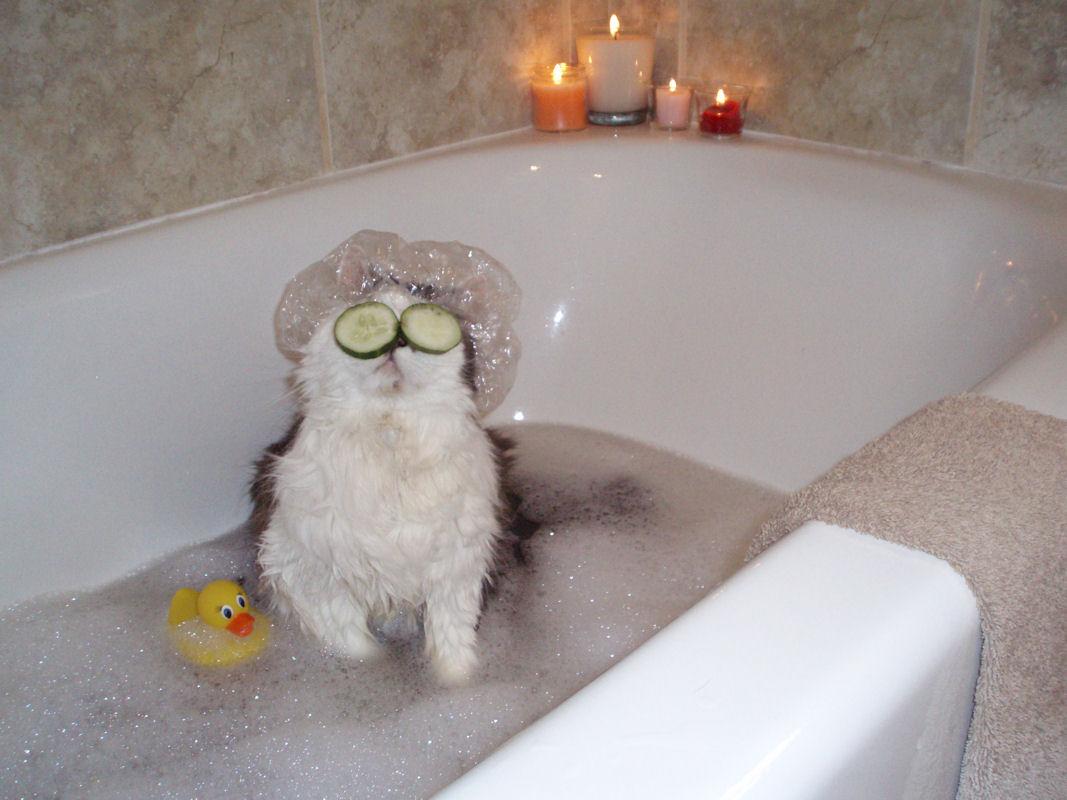 Я в ванной картинки смешные